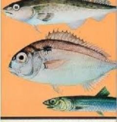 Pescado  Blanco  Versus   Pescado   Azul      ¿Cuál es mejor?