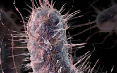 Detectan una superbacteria inmune a los medicamentos