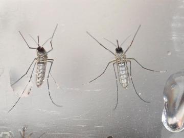 Un test que diagnostica el virus del Zika en sólo 20 minutos