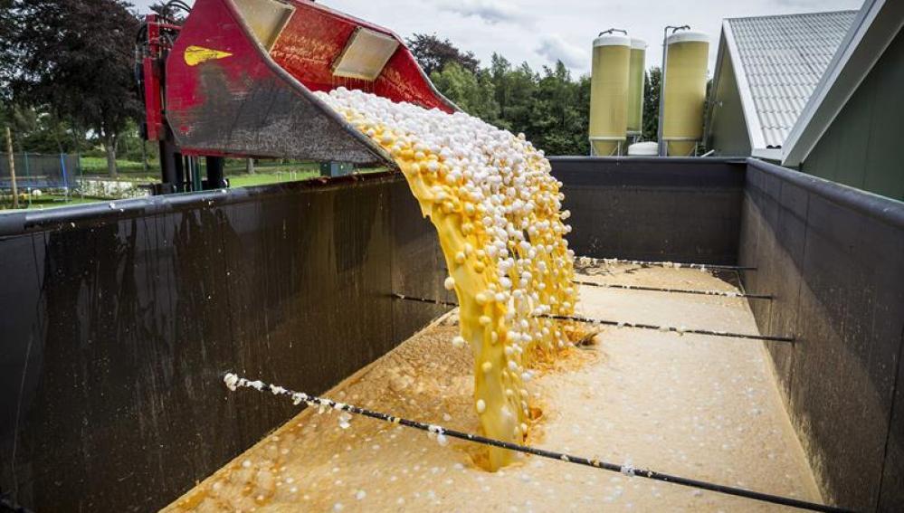 Se han detectado en España huevos contaminados por el insecticida friponil?