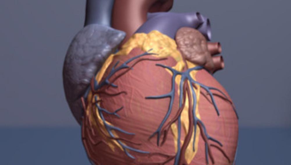 Un nuevo biomarcador ayuda a predecir los infartos hasta tres años antes