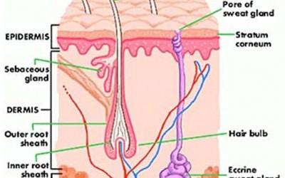 Fototerapia para el tratamiento del Acne Vulgaris
