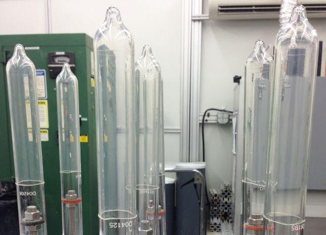 En busca del condón más fino: crean un látex ultra delgado gracias a una resistente planta australiana