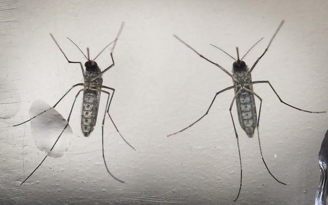 EEUU confirma la relación directa entre el zika y la microcefalia