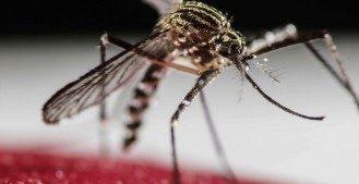 Todo lo que necesita saber sobre el virus Zika