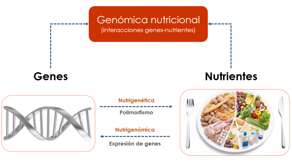 La nutrigenómica, por que la dieta perfecta no existe