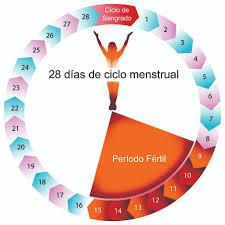 Calculadora de Ovulación, puede ayudarte a determinar los días del mes en que serás más fértil