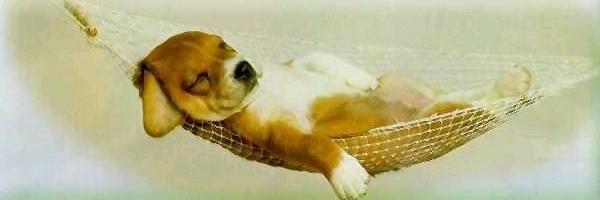 La siesta no es una costumbre sino una necesidad fisiológica