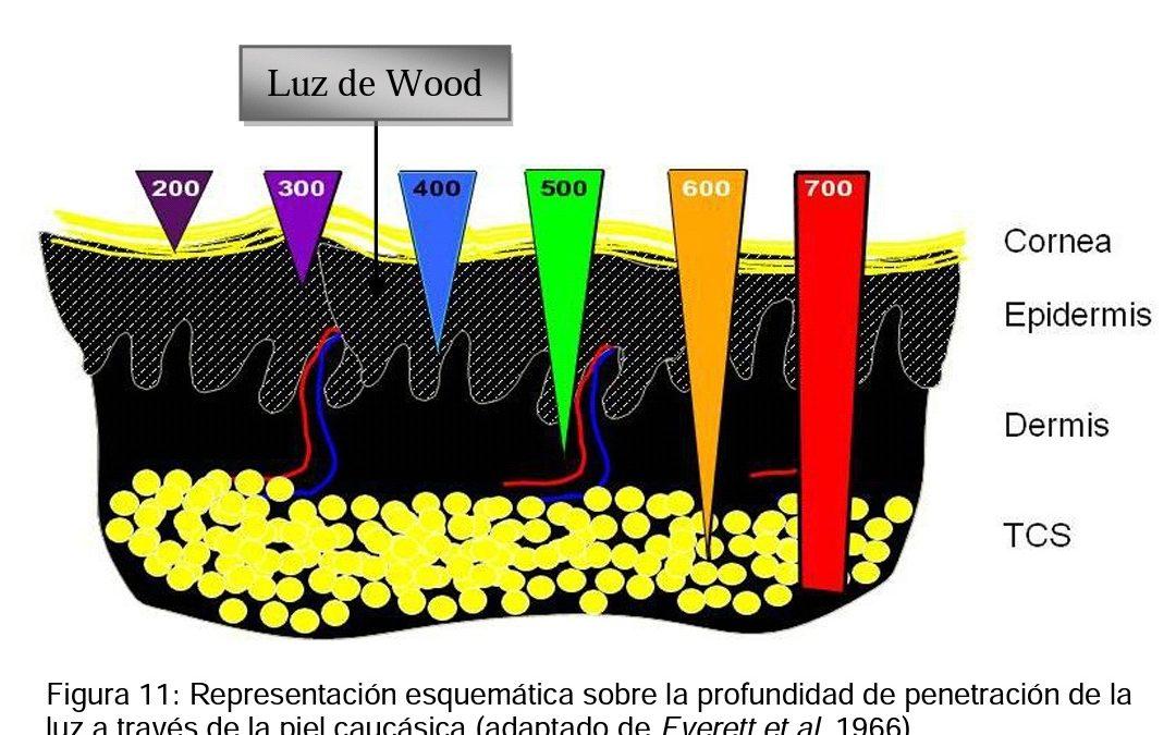 La luz de Wood, también llamada luz negra, se utiliza principalmente en los campos de estetica y medicina
