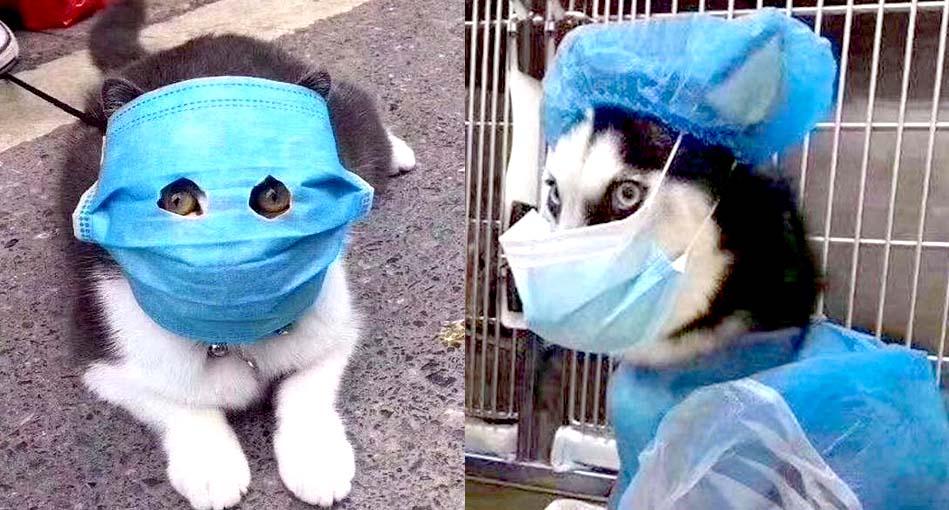 Coronavirus: contagio y síntomas. ¿Qué pasa con nuestras mascotas?